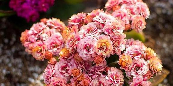 """""""它""""是天然""""有机土"""",直接种花不用发酵,生长茂盛,开花爆盆"""