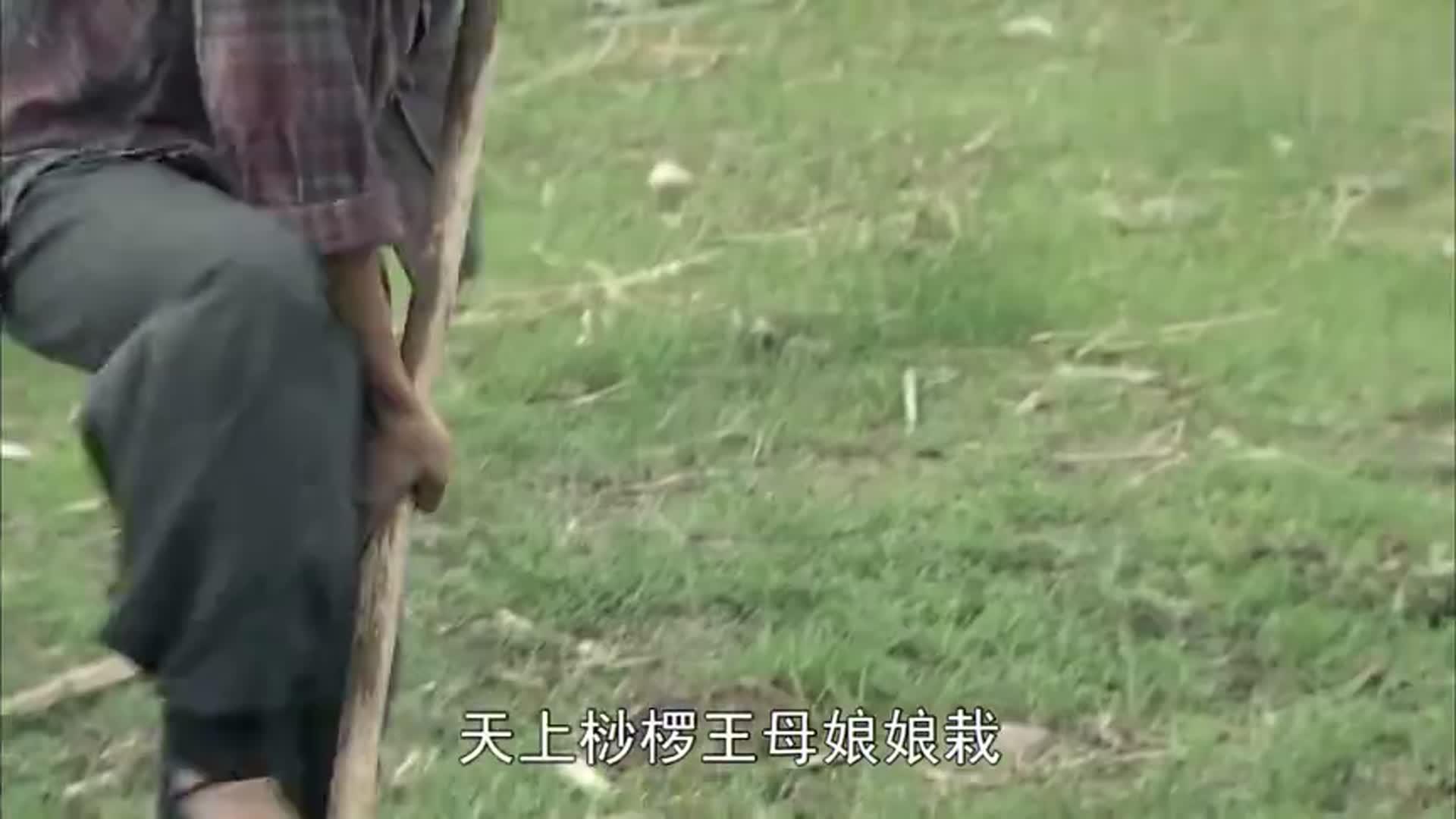 葛二蛋:二蛋真牛,动动嘴皮子,就让小舅子帮他挖坑,自己睡大觉