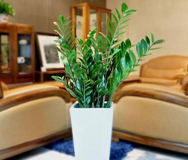 沐鸣平台装修网 客厅养花有讲究,别随便,这7种,养在客厅很合适,吉