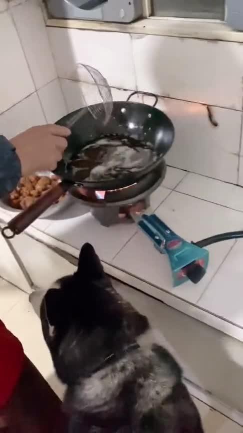 每天在厨房晃悠,总有捡漏的,狗狗的小心思!