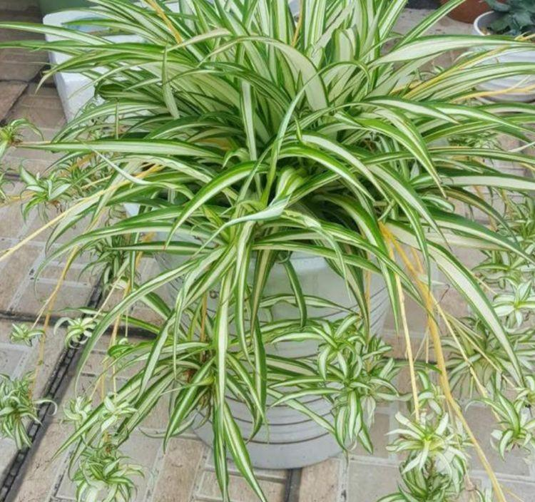 3种花寓意好,招财、旺家好兆头,是植物界净化空气能手