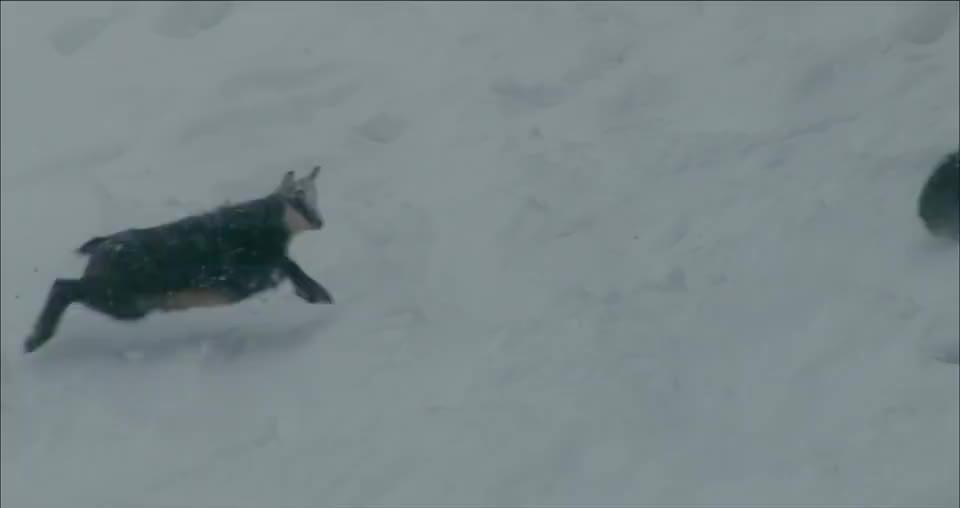 在这漫天大雪下鹰眼都不好使了,根本捕捉不到猎物