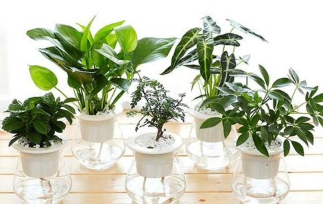 3种常见的花,适合水培养,没有经验也能养好