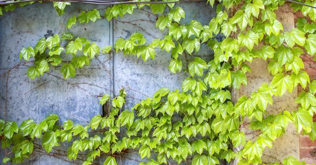 川美有中国国内最大的校友墙,更有涂鸦梯田和农舍水渠的神秘混搭