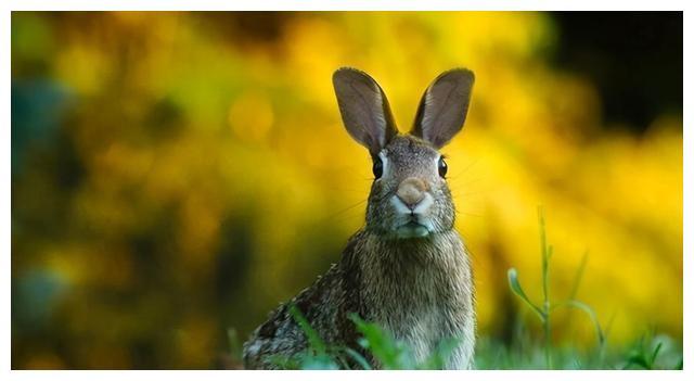 属兔的年份代表命运