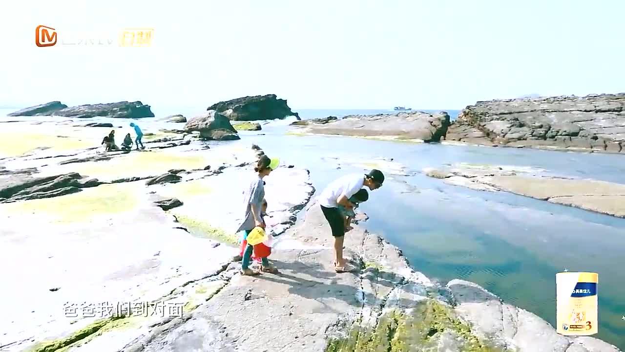 贾静雯拿出寄居蟹让女儿们看,波妞竟一动不动,可爱到犯规!