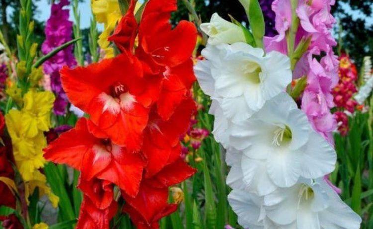 几种花卉,好活易爆盆,花姿妖娆超美的,四季繁花似锦