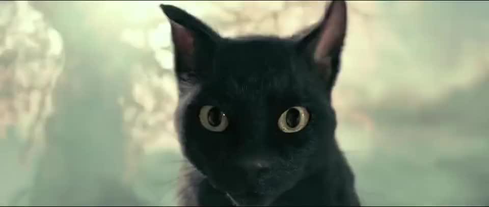 妖猫传:白龙魂魄进入黑猫身体,恍惚中听到贵妃哭喊,发誓要报仇