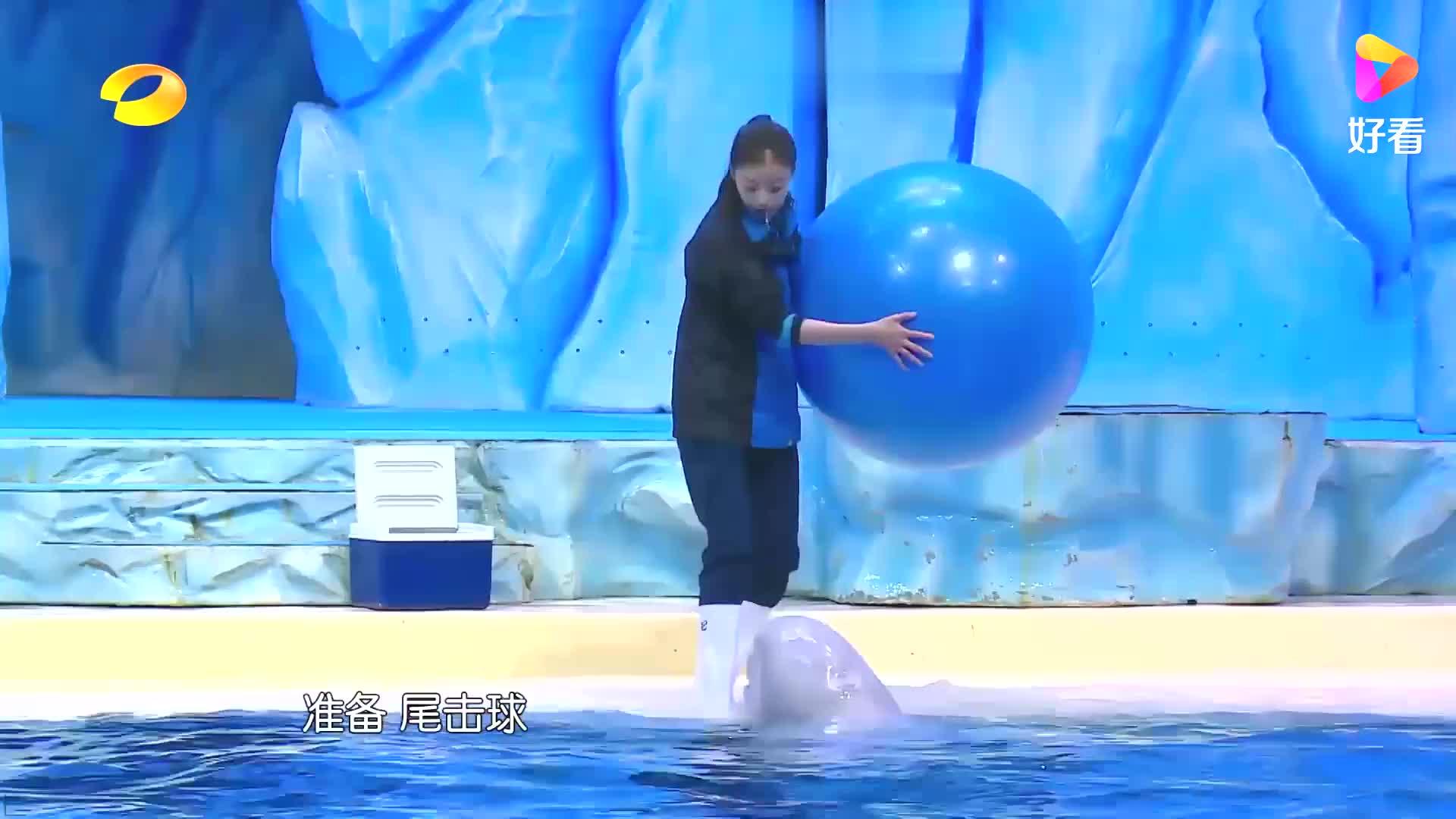 李宇春训练白鲸,手势太标准了,堪比专业训练师!丨奇妙的朋友