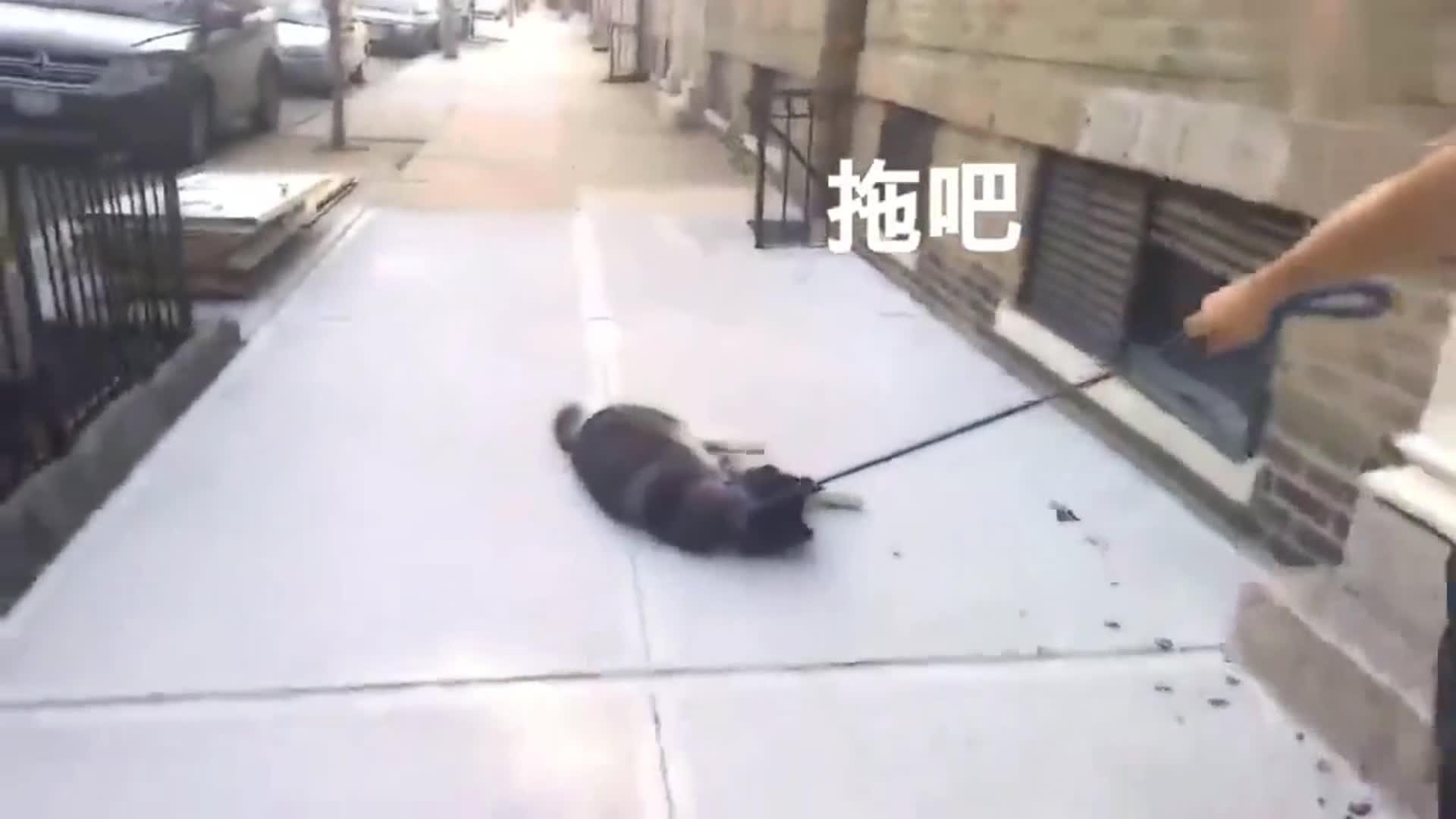 http://www.weixinrensheng.com/mengchong/2989062.html