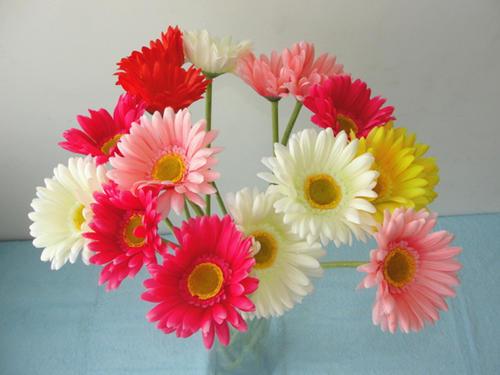 几种花卉好养易活颜值高,一开就是大半年,新手也能样很好