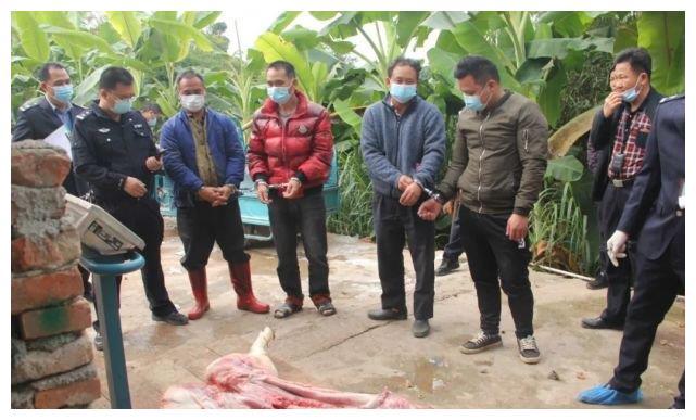 罗定公安捣毁私宰生猪窝点3个, 抓获犯罪嫌疑人14名