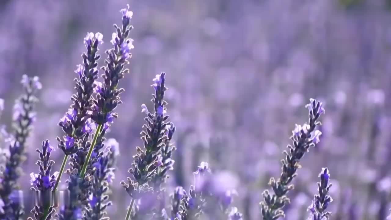 许绍洋一首《花香》熟悉旋律响起,瞬间被感动!