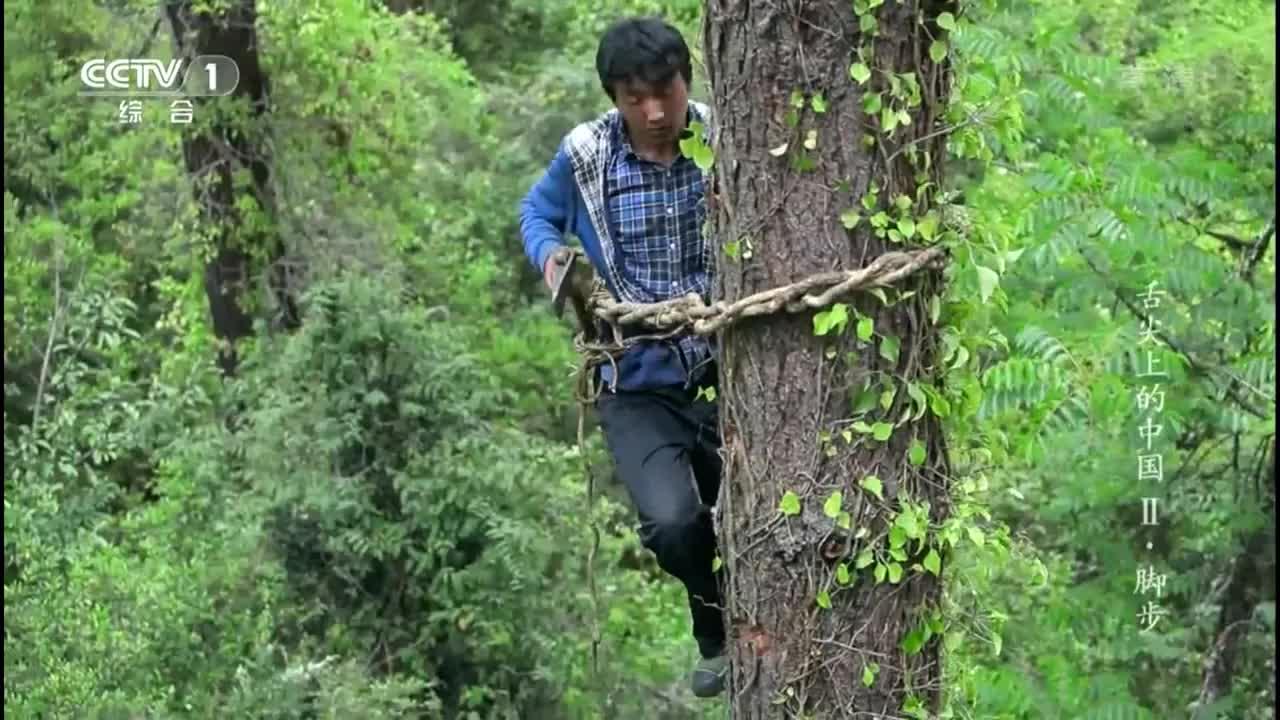 舌尖上的中国:爬了三个小时的高树,就为了一窝蜜蜂,好危险