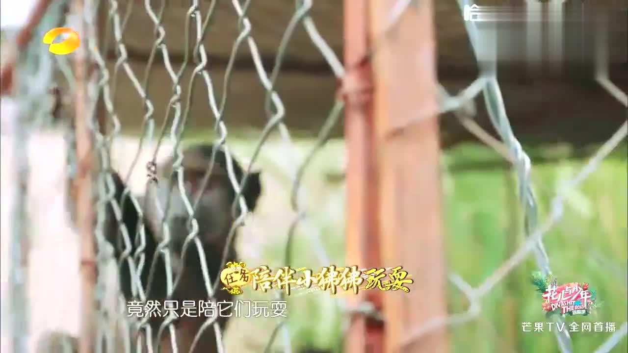 宋祖儿娜扎给猴子换尿不湿,下一秒突然发飙,女神吓坏了!