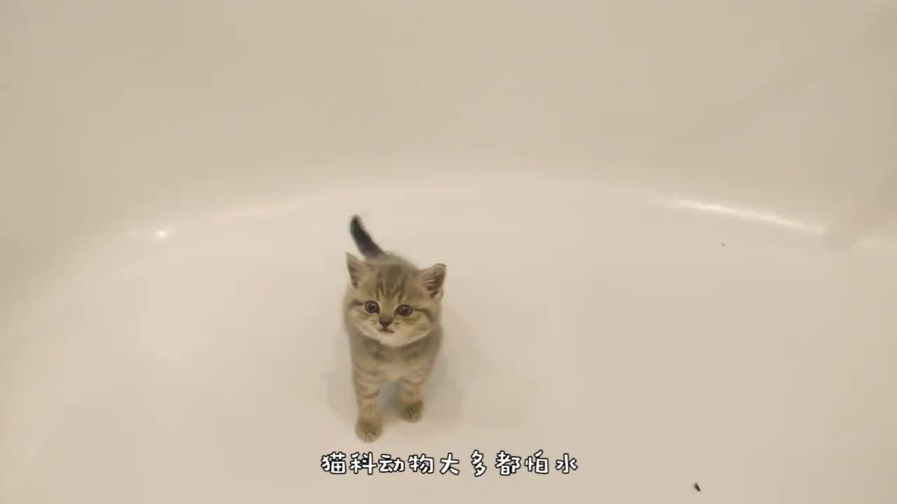 小猫咪不慎落水,猫妈妈拼命伸手救援,网友:母爱太伟大了!