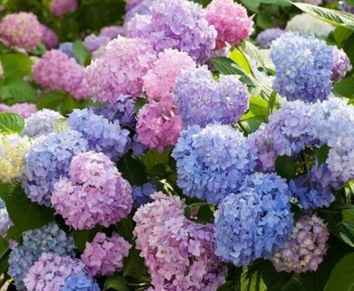 几款花卉便宜又好养,颜值超高的,家里秒变小花园