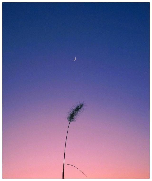 精致唯美的句子送给你,开启美好的一天
