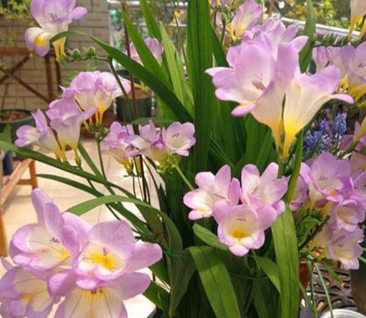 便宜又好养的几款花卉,对待新手很友好,丢到阳台四季有花开