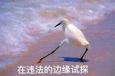 """连黄牛都不敢碰的租车违章!省事背后""""藏猫腻"""""""