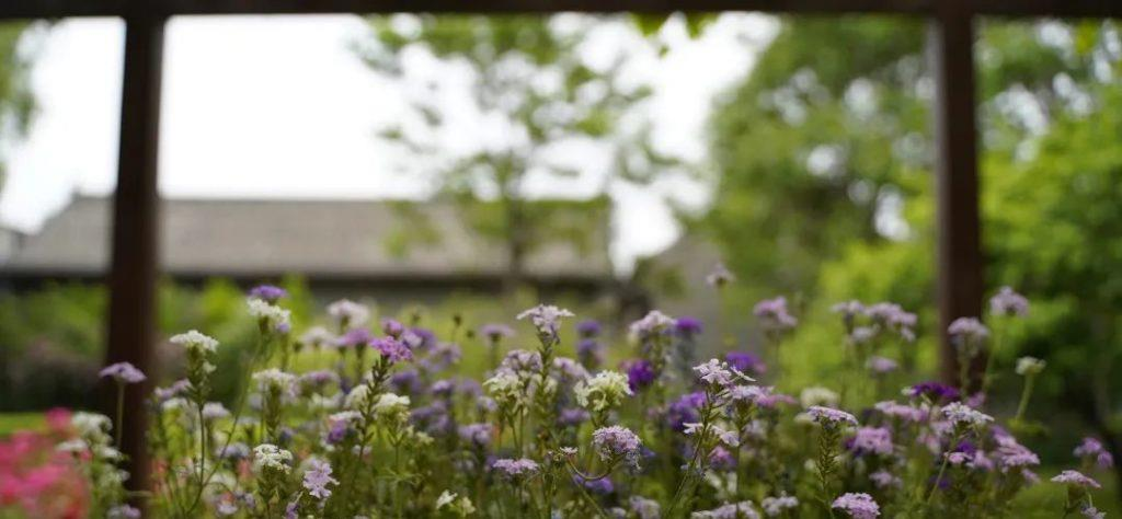 夏日盛景,康百万庄园里那些姹紫嫣红的花儿