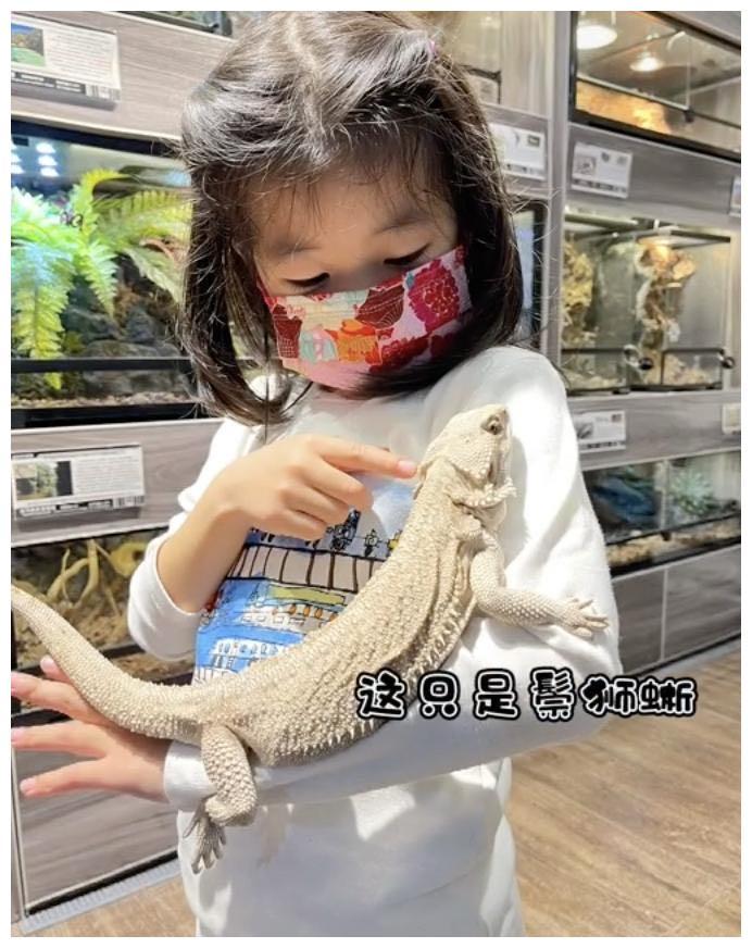 章子怡让女儿把宠物蛇挂脖子上,抱着蜥蜴和青蛙摸,醒醒胆子真大