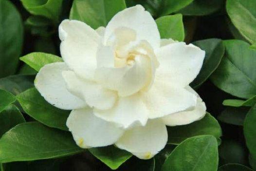 养花试试此几种花,好养易活花量大,开花爆盆很容易