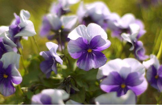 几款艳丽的花卉,漂亮又好闻,一养就养爆,家里变成小花园