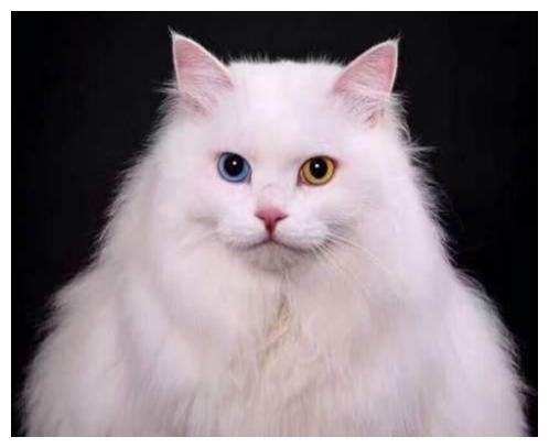 """SHE的《波斯猫》,不仅好听更好看,有""""猫王""""、""""王妃""""的美誉"""