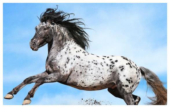 心理测试:你认为哪匹骏马跑最快?测出2021年你会拥有什么好运?