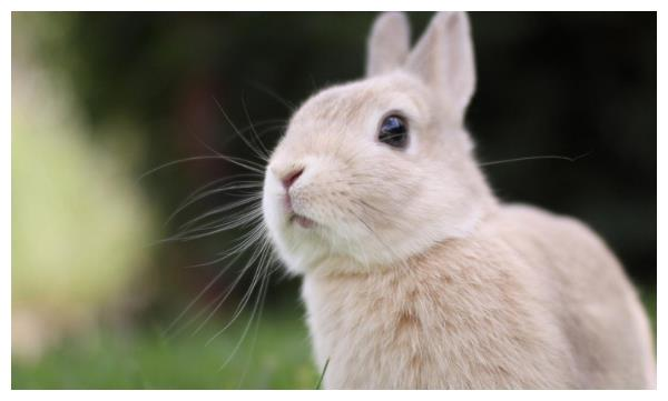 十兔九不全,1975年属兔人的晚年命运,50岁后该何去何从?