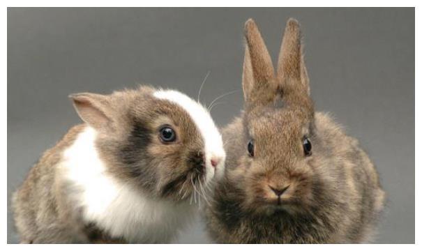 """致1975年""""兔兔""""的一生宿命:47岁后是穷是富?家有属兔人速看"""