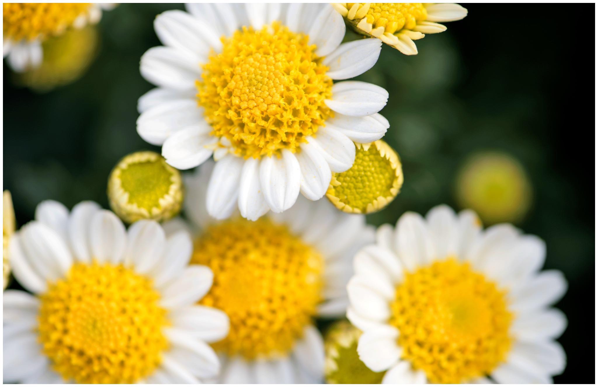 心理测试:选一朵你最喜欢的花?测你的善良还剩多少?