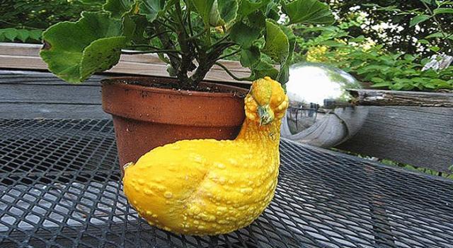 一不小心就放飞自我的果蔬,西红柿长成小鸭子,草莓是要成精了吗