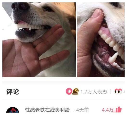 神回复:爷爷假牙掉了,找半天找不到,结果看到狗子诡异的笑容!