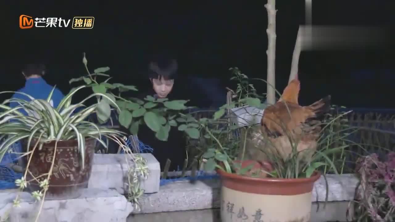 台风少年:丁程鑫不愧是大哥哥,抓起鸡来干净利落,吓呆宋亚轩!