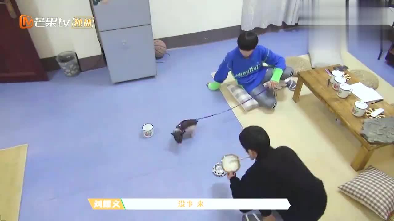 台风少年:刘耀文喂猪吃面条,宋亚轩葛优躺围观,慵懒感十足!