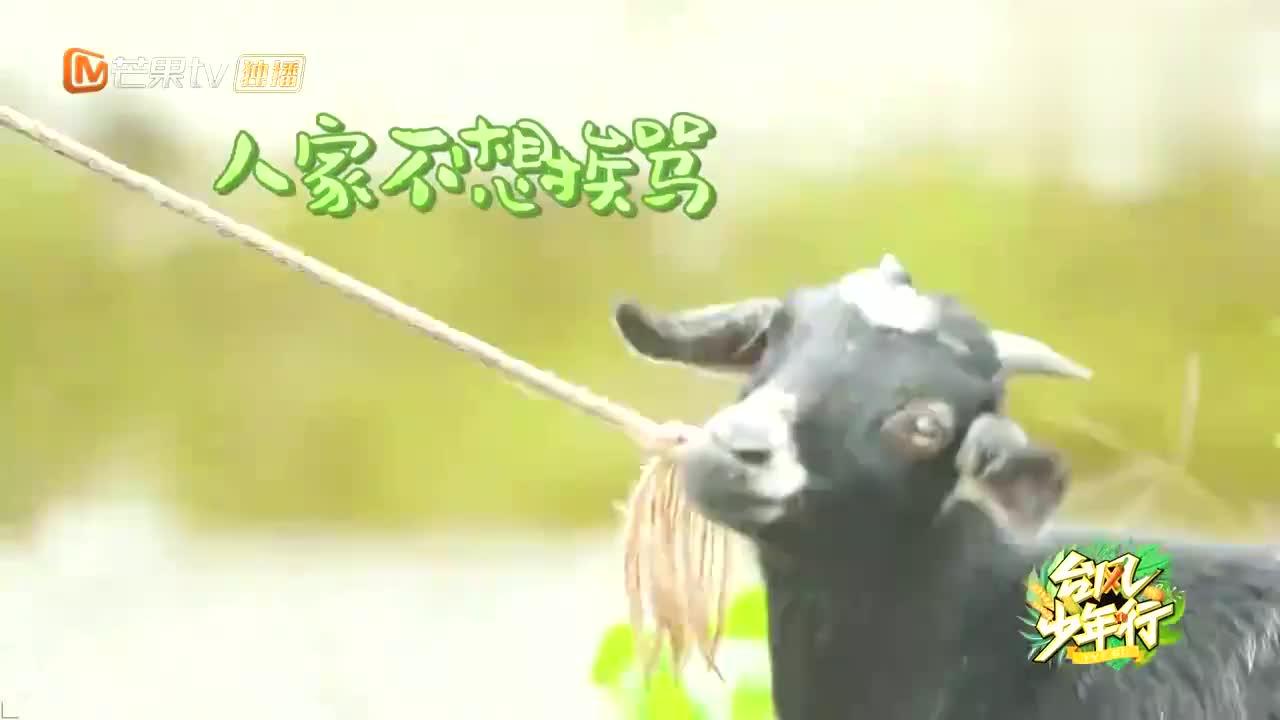 时代少年团跟羊讲起道理,刘耀文一本正经诉苦,画面不要太逗!