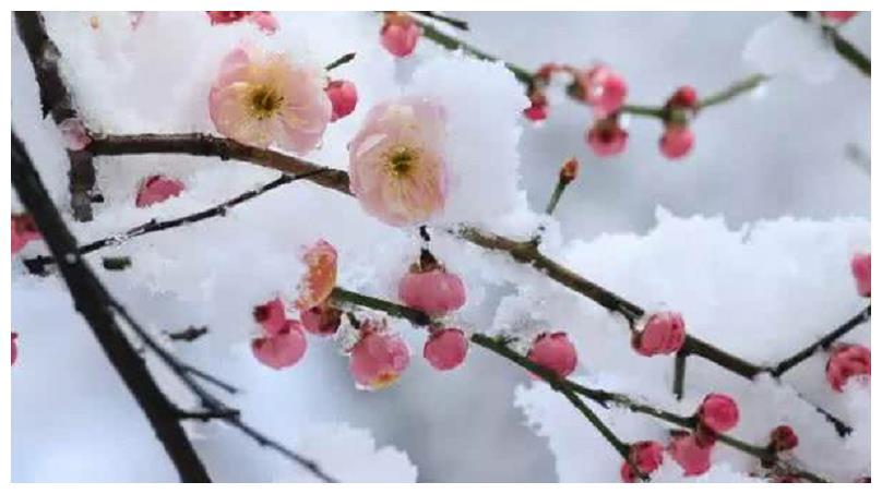 王安石的梅花诗,梅花凌寒绽放、暗香袭人,诗人的形象也跃然纸上