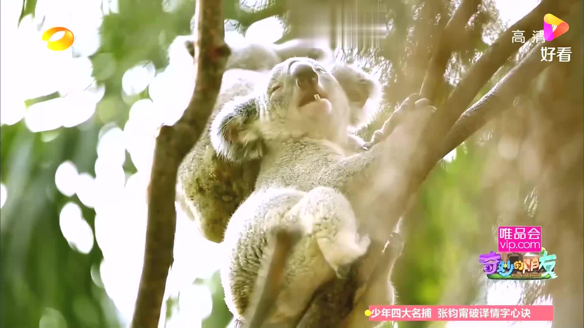杜海涛觉得袋鼠不和同类亲近的原因是它以为自己是人丨奇妙的朋友