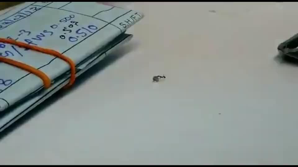 蚂蚁到珠宝店偷钻石,举起一颗就想跑,监控记录全过程
