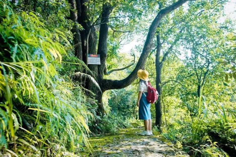广东观音山黄淦波:把生态美景留在灵动的森林里