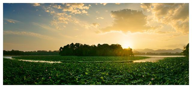 我的摄影,荷塘篇,颐和园的荷花-1