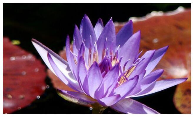 养花试试这几款,花朵漂亮,特别艳丽,妩媚多姿