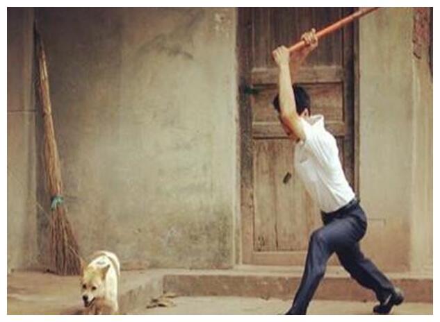 养狗,就不要做这5件事,小心让狗伤心