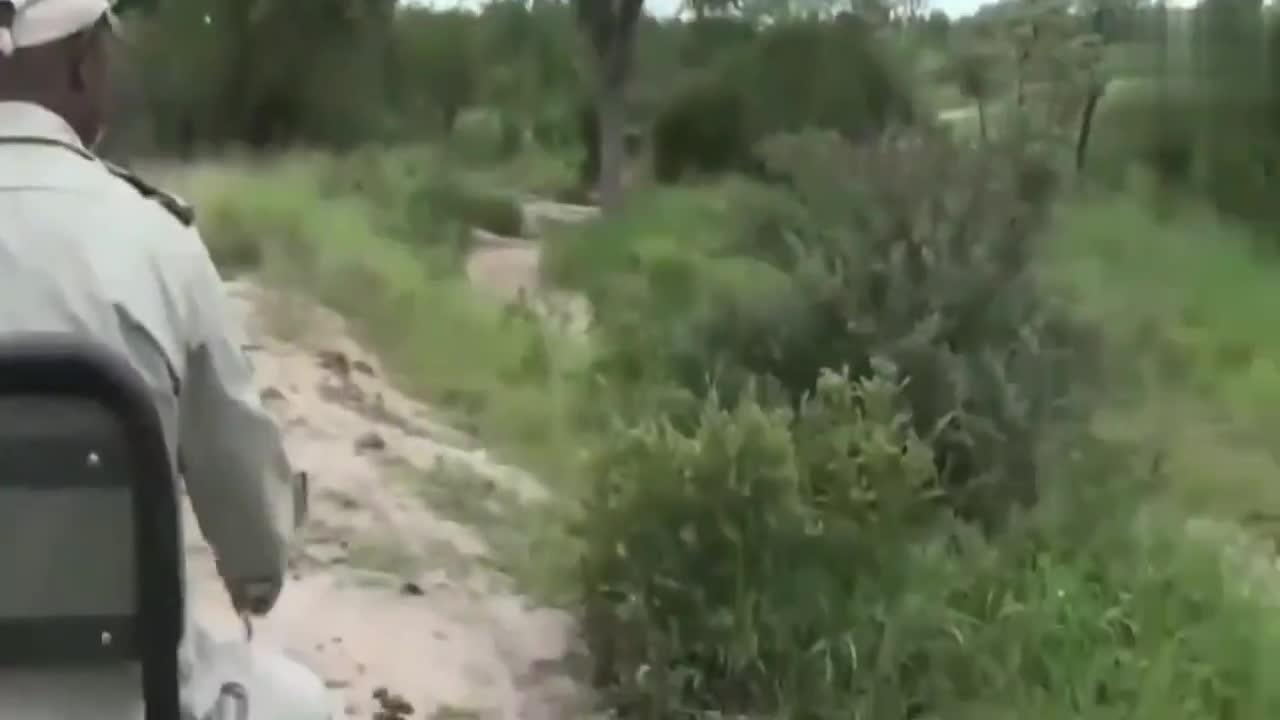 一群草原之王偷袭正在喝水的羚羊,场面震撼,自然界真是多姿多彩