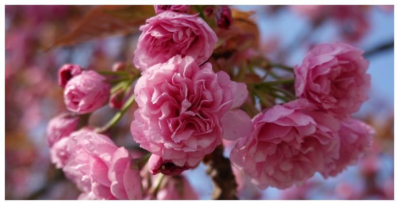4月上旬:青鱼飞鸟,三生三世,4大星座逢爱情高峰,余生刻骨铭心