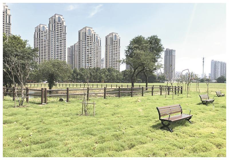 """8月底这里将成为""""花海"""" 滨湖区又添6.5万平方米打卡地"""