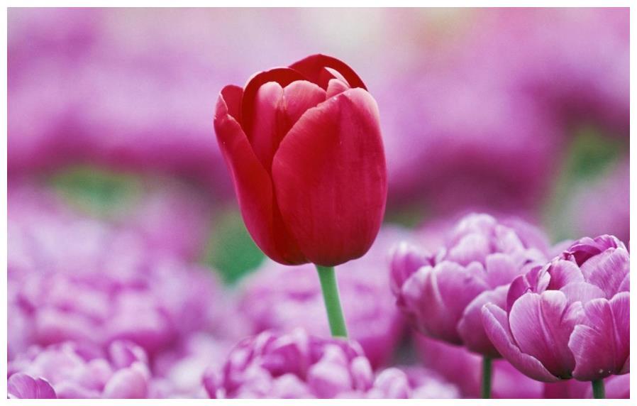 4月末,红尘俗世,避不开,理不清,期待回到从前,旧情复燃