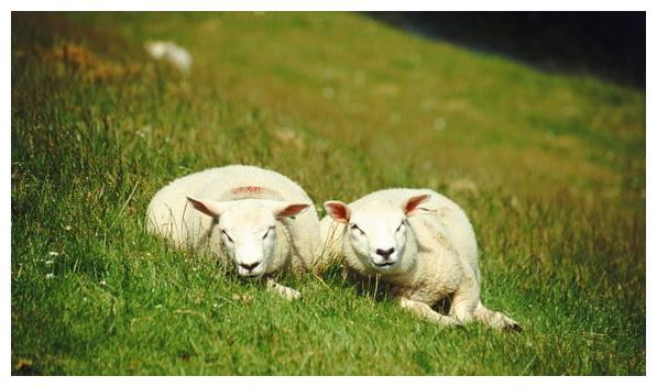 属羊人:2021年财神降临富贵后半生,尤其是1967、1979年!